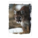 Mountain Lion Postcards (Package of 8)