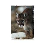 Mountain Lion Rectangle Magnet (10 pack)