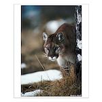 Mountain Lion 14x20 Small Poster