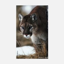 Mountain Lion Rectangle Decal