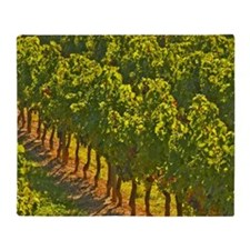 The vineyards: vines in a row. - Cha Throw Blanket