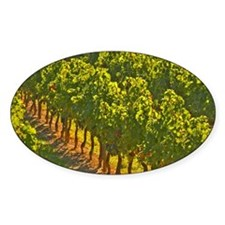 The vineyards: vines in a row. - Ch Decal