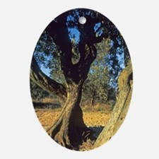 Trunk of olive tree, Provence, Franc Oval Ornament