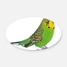 green parakeet Oval Car Magnet
