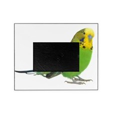 green parakeet Picture Frame