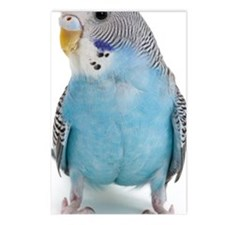 blue parakeet Postcards (Package of 8)