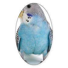 blue parakeet Decal