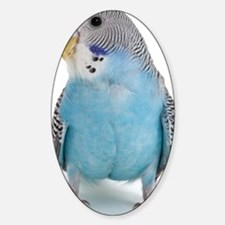 blue parakeet Sticker (Oval)