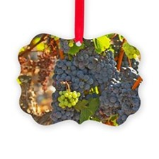 A cabernet Sauvignon vine, circa  Ornament