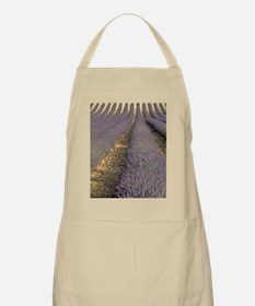 Europe, France, Provence. Lavender fields Apron