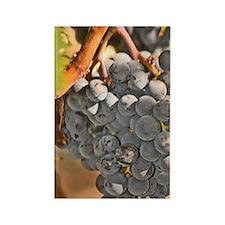 A single cabernet Sauvignon bunch Rectangle Magnet