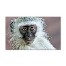 Vervet Monkey Rectangle Car Magnet