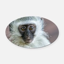 Vervet Monkey Oval Car Magnet