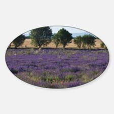 France, Provence. Rows of lavender  Sticker (Oval)