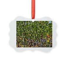 A vine with ripe Merlot grape bun Ornament