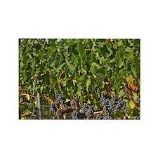 A vine with ripe Merlot grape bun Rectangle Magnet