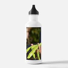 Green Beans in the veg Water Bottle