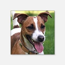 """Jack_Russell_Terrier Square Sticker 3"""" x 3"""""""