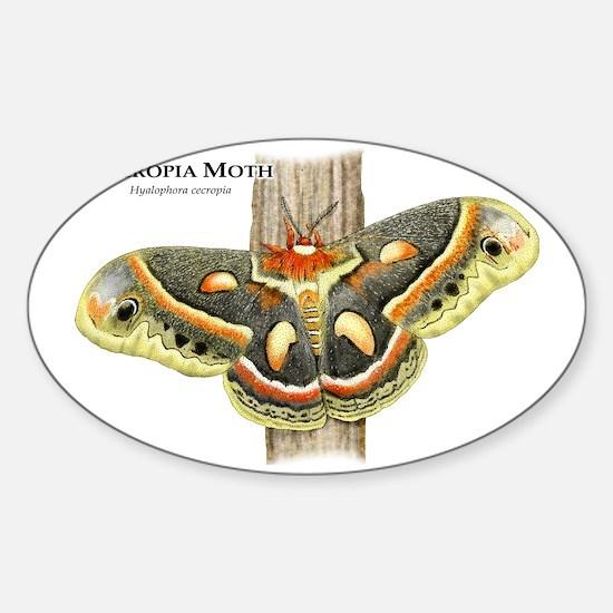 Cecropia Moth Sticker (Oval)