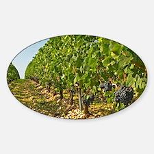 Cabernet Sauvignon vines in a row i Sticker (Oval)