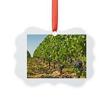 Cabernet Sauvignon vines in a row Ornament
