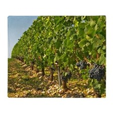 Cabernet Sauvignon vines in a row in Throw Blanket