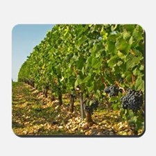 Cabernet Sauvignon vines in a row in the Mousepad
