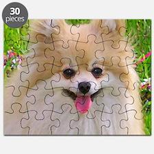 Pomeranian Puzzle