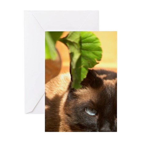 The head face of a chocolate brown c Greeting Card