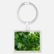 A vineyard that is treated with Landscape Keychain