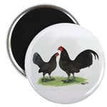 Chocolate OE Bantams Magnet