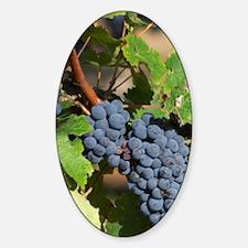 A cabernet Sauvignon vine, circa 35 Sticker (Oval)
