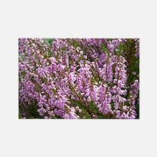 purple heather - wide version Rectangle Magnet