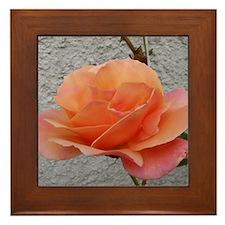 coral rose - squared off Framed Tile