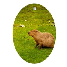 Capybara Oval Ornament