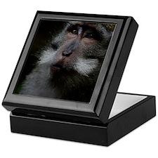 Long-Tailed Macaque Keepsake Box