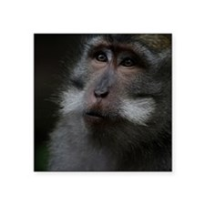 "Long-Tailed Macaque Square Sticker 3"" x 3"""