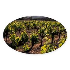 Gordes. Provencal vineyard detailsr Decal
