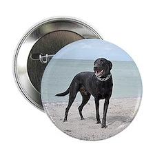 """Black Labrador 2.25"""" Button"""