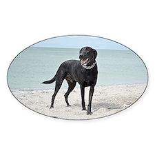 Black Labrador Decal