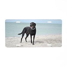 Black Labrador Aluminum License Plate