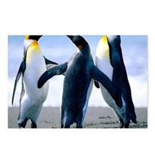 Penguins - Copy Postcards (Package of 8)