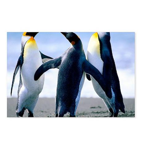 Penguins - Copy Postcards (Package of 8)