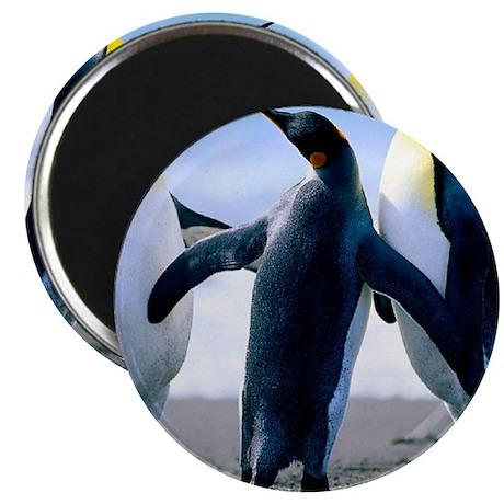 Penguins - Copy Magnet