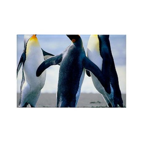 Penguins - Copy Rectangle Magnet