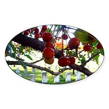 10Oct21_fallGRANDVIEWberries Decal