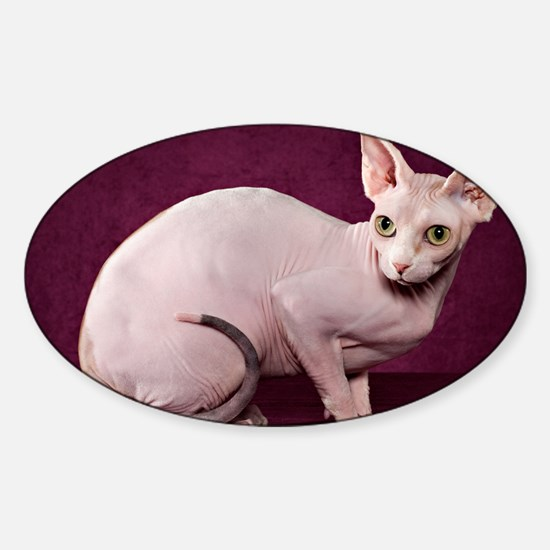 Sphynx10 Sticker (Oval)