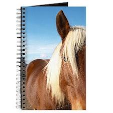 Caux. Pezenas region. Languedoc. Horse for Journal