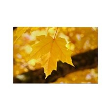 Autumn Leaves 53 Yellow Golden Gl Rectangle Magnet