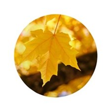 """Autumn Leaves 53 Yellow Golden Glowing 3.5"""" Button"""